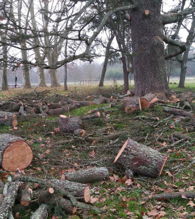 Abattage d'arbre