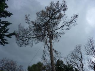 Abattage d'un arbre pin en hauteur près de Lorgues - Var Elagage