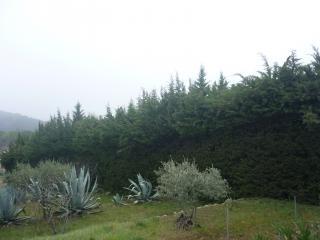Taille de haies tous types d'arbres et arbustes dans le Var