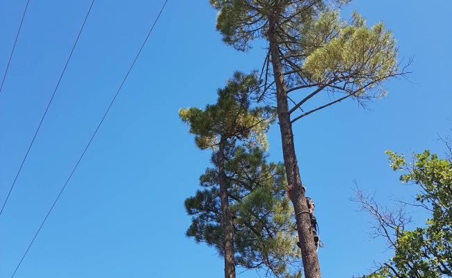 Abattage d'arbres proches de lignes électriques haute tension