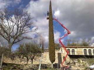 Taille de cyprès au Domaine des Rabelles à Villecroze (83)