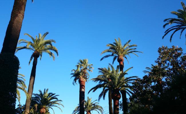 Taille de palmier près de Saint Tropez dans le Var