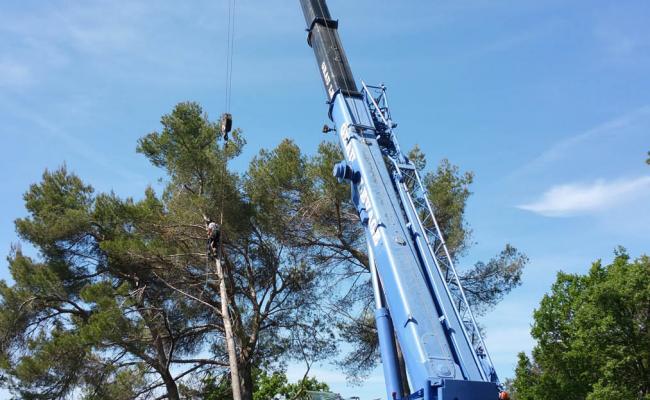 Abattage d'arbres en hauteur avec grue de plusieurs mètres