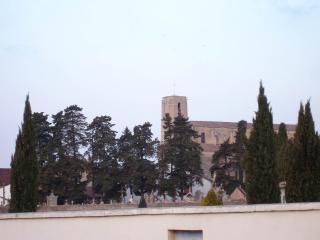 Élagage de cyprès près de Fréjus (83)