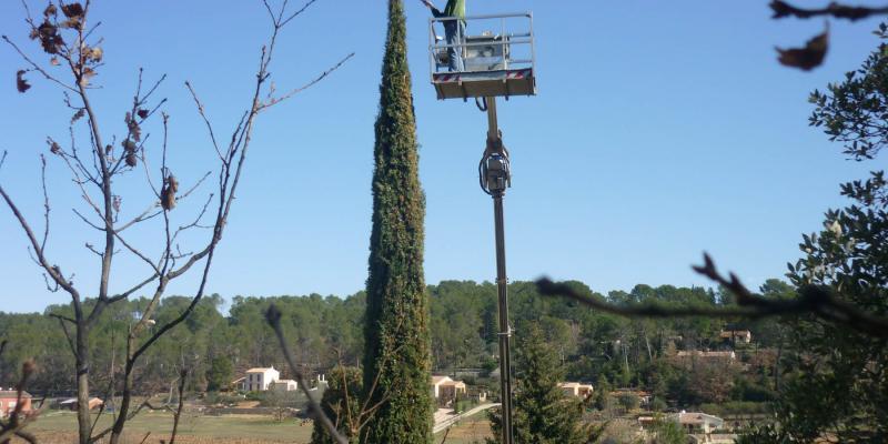 Taille d'un cyprès de Provence à Lorgues (83)