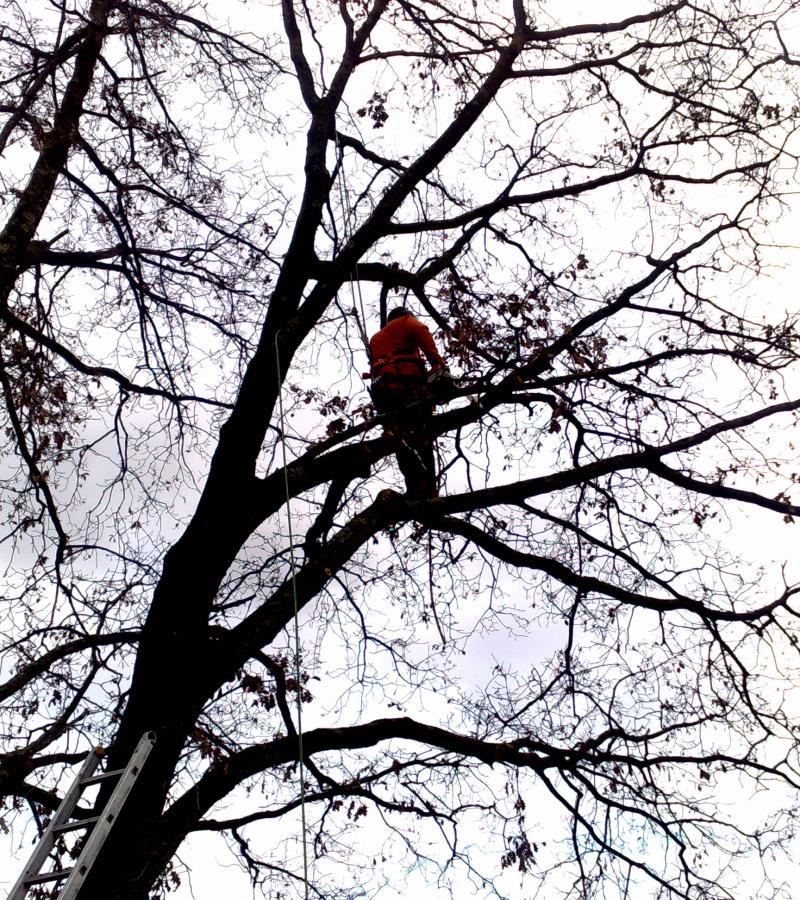 Elagage d'arbre toutes hauteurs