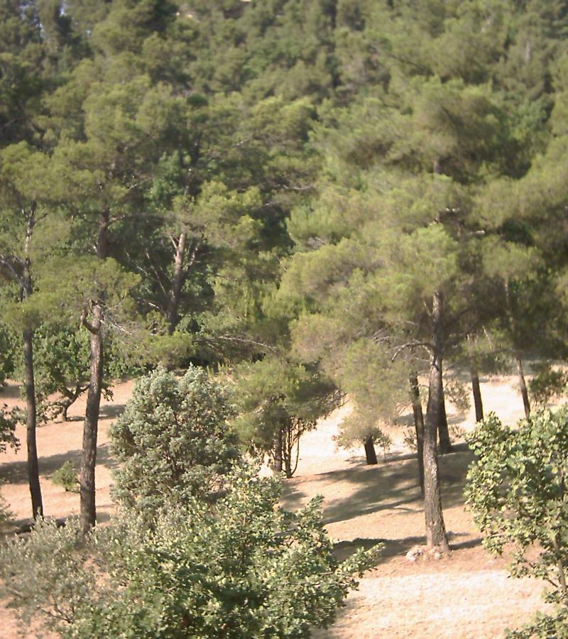 Nettoyage d'espaces verts et de jardins de propriétés dans le Var (83)