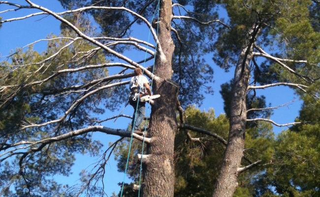 Abattages d'arbres délicats par démontage toutes hauteurs