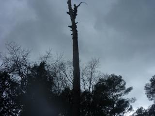 Abattage d'arbre complet - pin maritime - Var Elagage