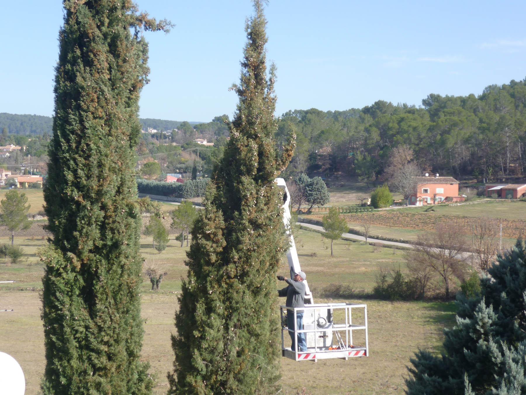 Cypr s de provence taille ornementale frejus st rapha l draguignan - Les jardins de provence 77 ...